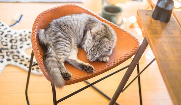 椅子で眠るペットの猫の写真